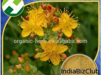 St John S Wort Alcohol Extract
