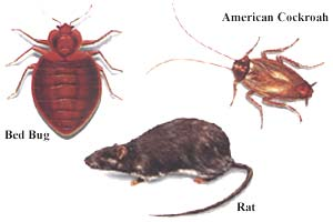 Pest Control (Rodent Control and Carpet Treatment)