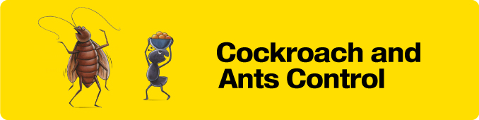 Cockroach & Ant Control Services