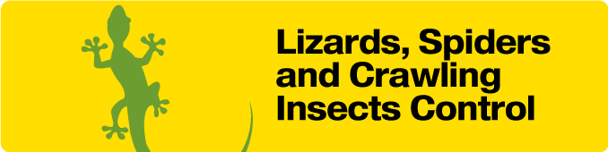 Lizards, Spiders, Crawling Insects  Control Services